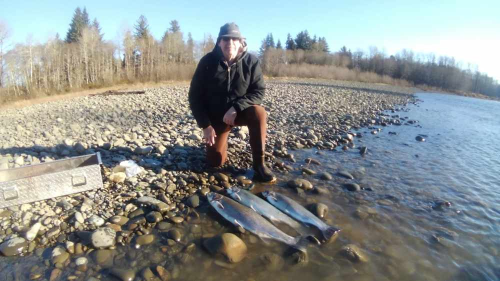 Hatchery Steelhead
